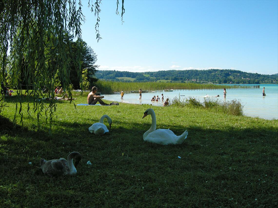 Le Lac Du0027Aiguebellette Est Réputé Pour être Un Des Lacs Les Plus Doux De  France. En été, La Température Moyenne De Lu0027eau Peut Atteindre 27°C ! Cu0027est  Alors ...
